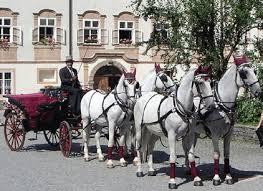 Entrenador de caballos en Viena